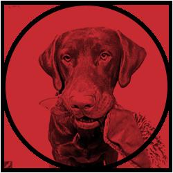 Website Image Logo for Nya #1 Kryptovalutor